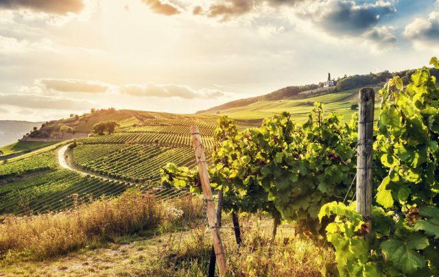 Weinbau & Agrarwirtschaft - TPA